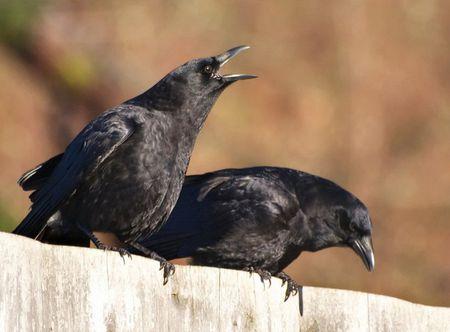 Giai ma diem bao khi chim bay, ran bo vao nha duoi goc nhin khoa hoc phong thuy - Anh 2