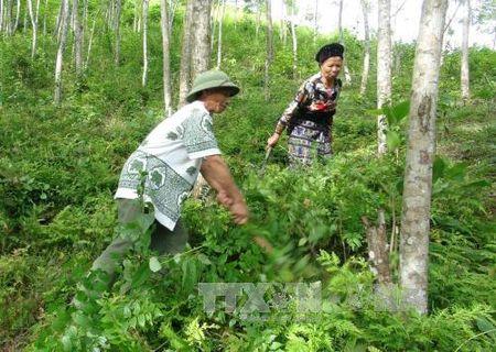 Cuoc song moi cua nguoi Mong noi cong troi Muong Lat - Anh 2