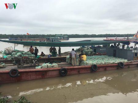 Hai Phong: Ngao chet hang loat khong ro nguyen nhan - Anh 3