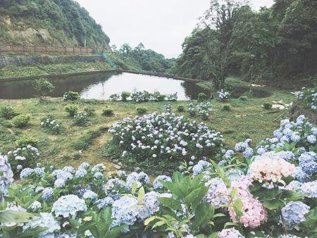 Cao Bang: Ngam vuon hoa Cam tu cau ruc ro tren rung Phia Den - Anh 5
