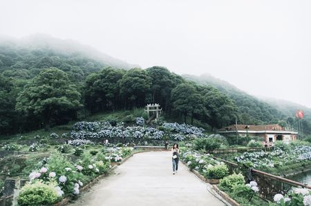 Cao Bang: Ngam vuon hoa Cam tu cau ruc ro tren rung Phia Den - Anh 7