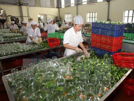 Nguyen nhan nao khien nong san Viet kem canh tranh? - Anh 2