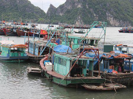 Bao so 2: San sang di doi hang van dan tu Thanh Hoa - Ha Tinh - Anh 17