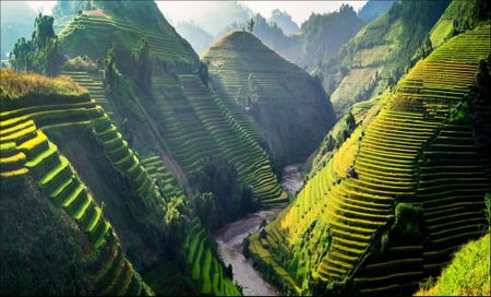 Tay Bac mua lua chin ruc ro sac vang trong anh 'Dau an Viet Nam' - Anh 1