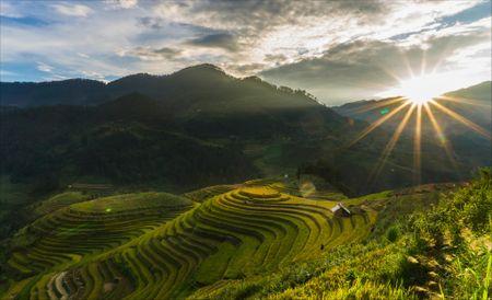 Tay Bac mua lua chin ruc ro sac vang trong anh 'Dau an Viet Nam' - Anh 6