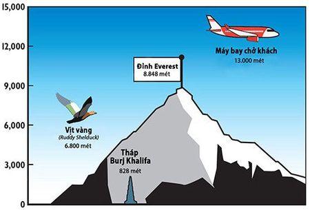 Loai vit bay vuot day Himalaya de sinh san - Anh 1