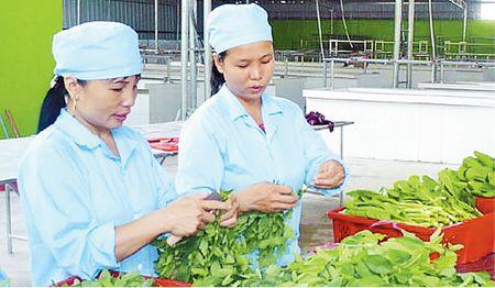 Huong phat trien thi truong rau an toan - Anh 1