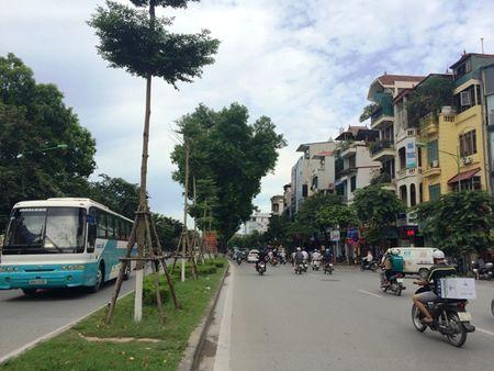 Dang bat dau chat ha, danh chuyen 130 cay xanh tren duong Kim Ma - Anh 3