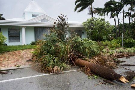 Hang chuc nguoi Florida bi bat vi loi dung bao Irma cuop boc - Anh 1