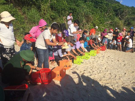 Quang Nam: Tha hang tram rua con ve moi truong bien - Anh 2