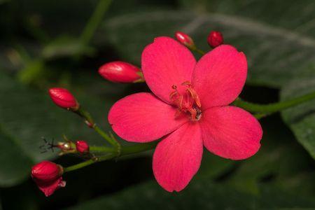 Hong mai - loai hoa mang ve dep 'doc-la' - Anh 8