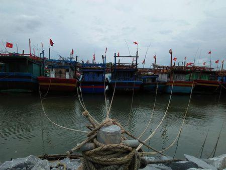 Quang Binh: Hon 20.000 ho dan trong vung nguy hiem cua Bao so 10 - Anh 3