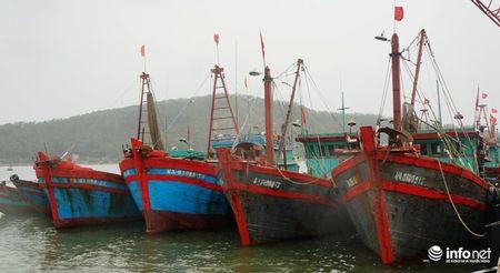 Nguoi dan Nghe An hoi ha 'chay' sieu bao - Anh 9