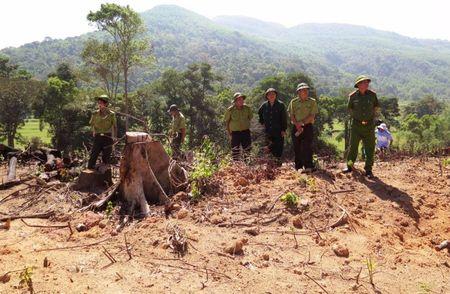 Vu pha rung o Binh Dinh: Dien tich rung bi pha len gan 61 ha - Anh 1