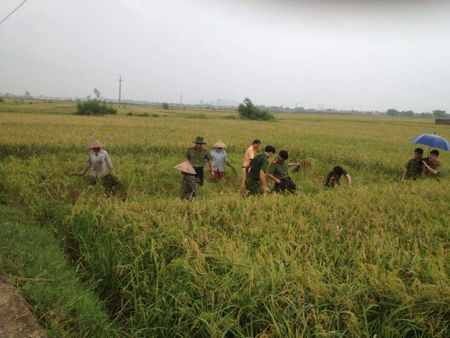 Thanh Hoa: Cong an Dong Son xuong dong giup dan chong bao so 10 - Anh 2