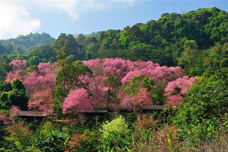 Nhung cung duong dep tai Thai Lan: Lai xe 100km quanh co o Mae Sa – Samoeng - Anh 2