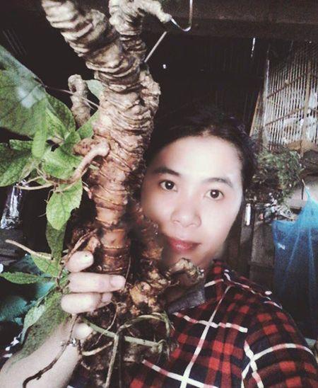 Kho 'quan' sam Ngoc Linh gia - Anh 1
