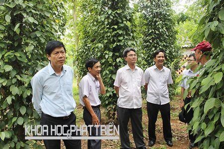 """Tieu Quang Tri co chi dan dia ly van """"vo danh"""" - Anh 1"""
