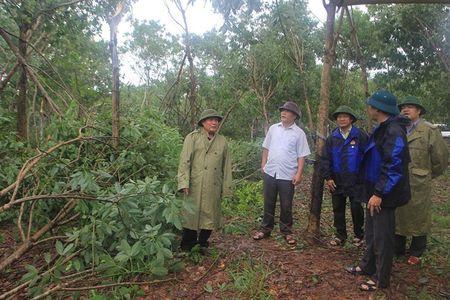 Quang Tri tung buoc on dinh cuoc song nguoi dan sau bao - Anh 1