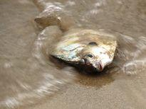 Nguyên nhân cá chết hàng loạt tại miền Trung: Cố gắng tháng 6 sẽ công bố