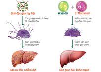 Tăng men gan tiềm ẩn nguy cơ ung thư
