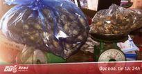 Cửa hàng Đông y ở Sài Gòn bị bắt quả tang bán quả thuốc phiện