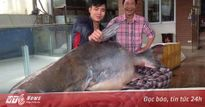 Săn cá 'khủng' nặng hơn 100kg làm quà biếu Tết