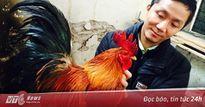 Bỏ chức giám đốc về nuôi gà cổ thuần Việt
