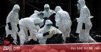 Dịch cúm chết người hàng loạt biến đổi độc lực cao ở gia cầm