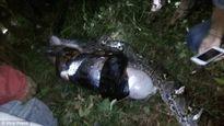 Indonesia: Trăn siết chết và nuốt trọn người đàn ông đi lấy dầu cọ