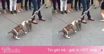 Trò chơi kéo co ở phố đi bộ Hồ Gươm 'vỡ trận' vì sự xuất hiện của chú chó dễ thương