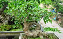 Mẹo phong thủy: Gia đình sung túc, tài lộc dồi dào nếu bạn trồng những loại cây này trong nhà