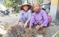 Độc đáo làng 'săn' lá thuốc, kiếm tiền triệu của người Dạ Lê