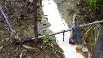 Hải Dương: Công ty CP Giầy Cầm Bình xả thải hóa chất ra môi trường?