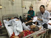 Gia tăng số người bị rắn cắn nhập viện