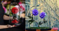 """Loài hoa hồng """"đắt xắt ra miếng"""" này đang làm điên đảo chị em khắp thế giới"""