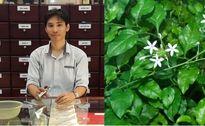 Lương y mách bài thuốc khỏi hẳn dạ dày sau 1 tuần nhờ lá bạch hoa xà