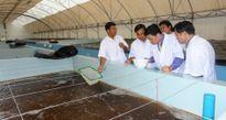 Bạc Liêu: Thành lập Khu nông nghiệp ứng dụng công nghệ cao phát triển tôm