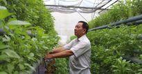 Lãi 50 triệu đồng/tháng từ trồng rau thủy canh hồi lưu