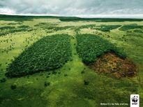 10 hình ảnh kêu gọi bảo vệ môi trường