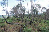 Người dân 'hồn nhiên' đốt rừng làm rẫy, biến đất xanh thành đồi trọc