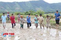 Tặng giống, vật tư nông nghiệp giúp đồng bào Chứt sản xuất lúa hè thu