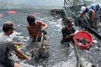 Trên 16 tỷ đồng bảo vệ và phát triển nguồn lợi thủy sản