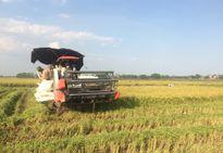 Cơ giới hóa đồng bộ: Khâu đột phá trong sản xuất lúa