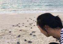 'Đỡ đẻ' cho rùa biển tại Côn Đảo