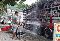 Giá lợn hơi 'leo thang' từng ngày, tăng thêm 1 triệu đồng/tạ