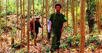 Bình Định: Cần gần 200 cán bộ quản lý rừng nhưng… chỉ có 44 người