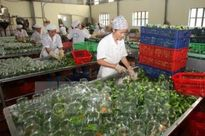 Nguyên nhân nào khiến nông sản Việt kém cạnh tranh?