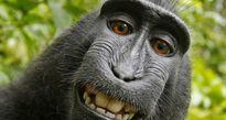 Nhiếp ảnh gia bị kiện đến phá sản vì bức hình 'Chú khỉ selfie' và lý do không ai ngờ tới