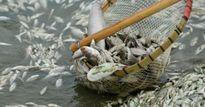 Đầm Dơi (Cà Mau): Cá chết liên tiếp 5 lần trong vòng 3 tháng